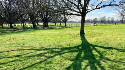 Free stock photo of landscape, park, shadow, sun