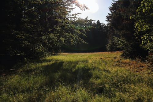 Free stock photo of forest, meadow