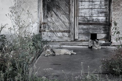 Free stock photo of cats, grey