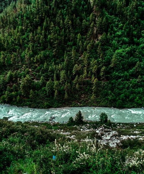 Základová fotografie zdarma na téma bujný, fotka zvysokého úhlu, fotografie přírody, indie
