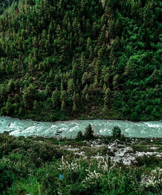 acqua, alberi, ambiente