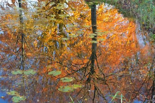 Free stock photo of autumn, fall colors, tree