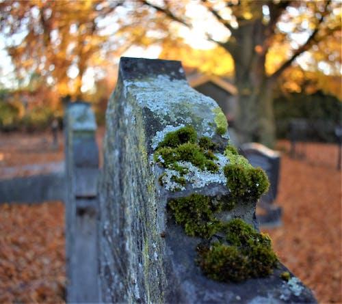 Free stock photo of autumn, cemetery, gravestones