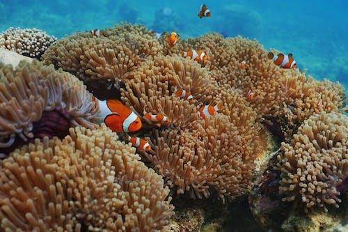 Δωρεάν στοκ φωτογραφιών με karimun jawa, snorkeling, αλεξίπτωτο, αναπνευστήρας