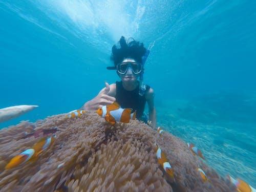 Imagine de stoc gratuită din adânc, agrement, albastru, anemonă de mare