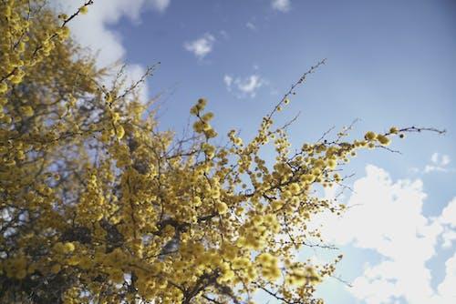 Kostnadsfri bild av blå, blå himmel, blommor, buskar