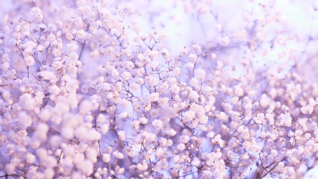 계절, 꽃, 꽃 바탕화면