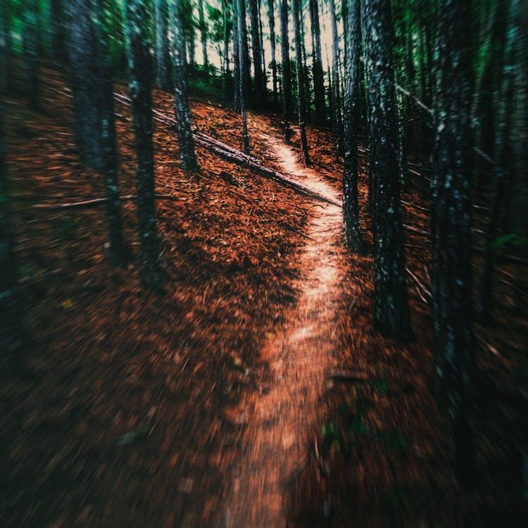 #mobilechallenge, #outdoorchallenge, #trees #earth #blur #movement #throughtheforest
