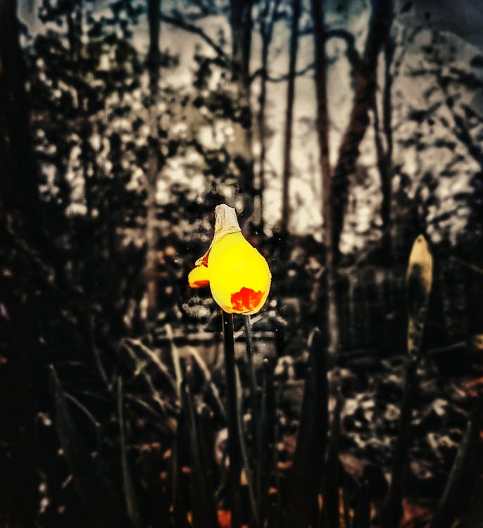 #flower #outside #earth #flowerportrait #pop, #mobilechallenge, #outdoorchallenge