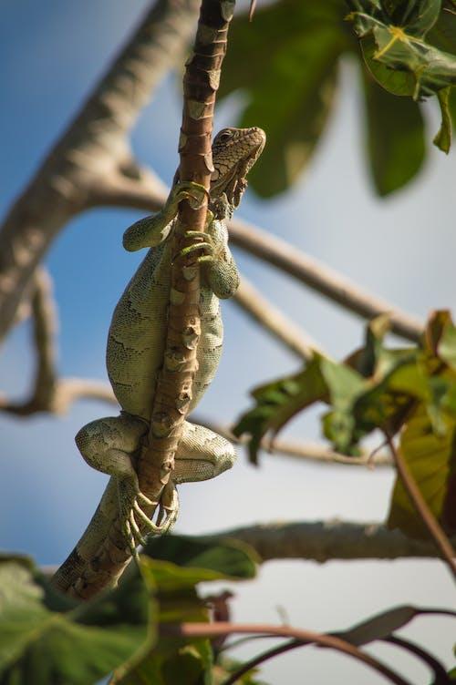 도마뱀, 동물, 동물 사진, 동물군의 무료 스톡 사진