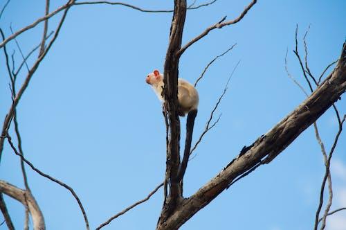 Foto d'estoc gratuïta de a l'aire lliure, animal, arbre, arbre nu