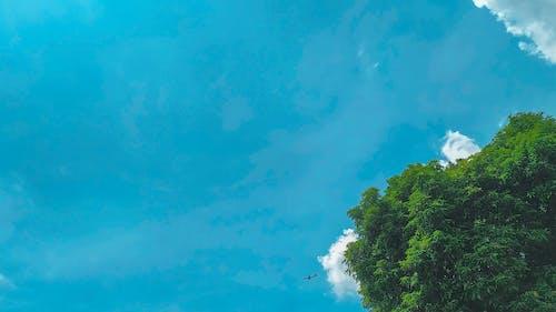 Ingyenes stockfotó #mobilechallenge, ég, fa, felhők témában