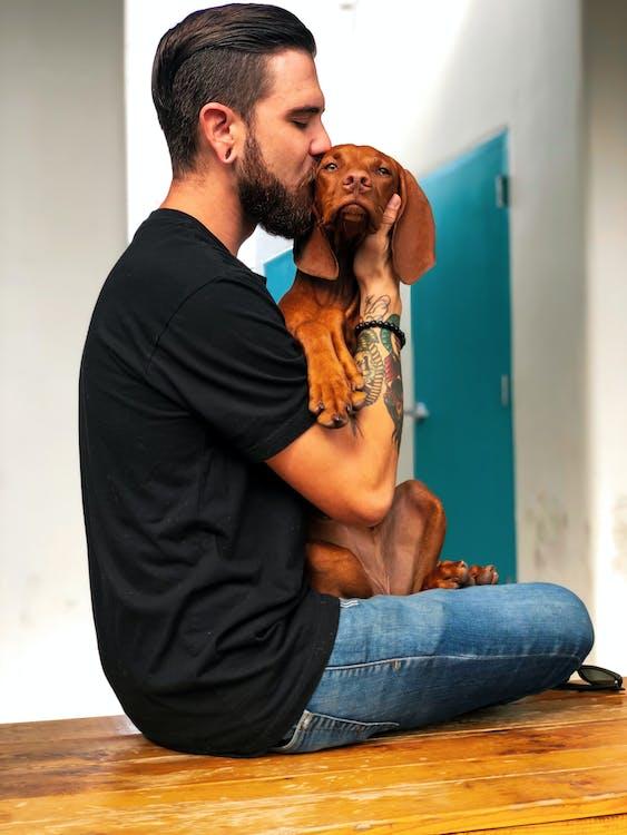 afecte, amant dels animals, amistat