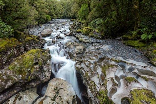 Imagine de stoc gratuită din apă, apă curgătoare, arbori, bolovani