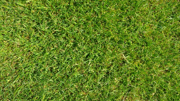 Free stock photo of texture, grass, green, football