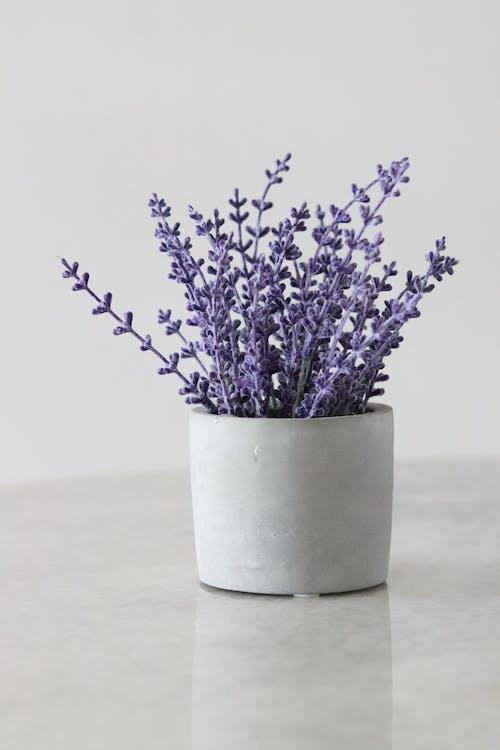 Бесплатное стоковое фото с Ароматерапия, Ароматический, ваза, вечнозеленый