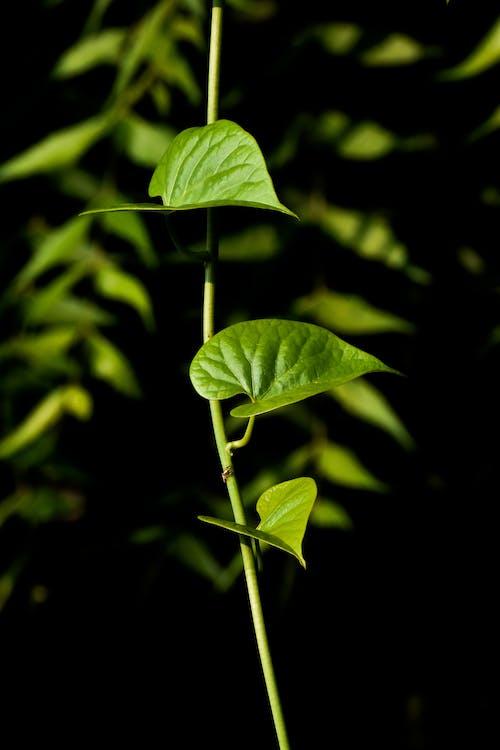 açık hava, asma, Bahçe, bitki içeren Ücretsiz stok fotoğraf