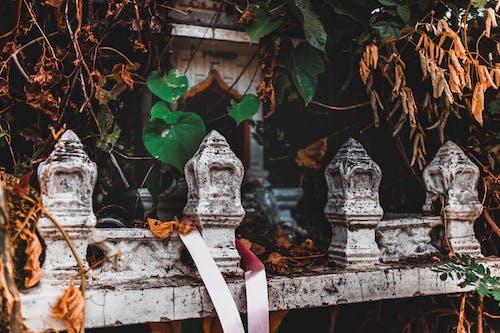 Fotobanka sbezplatnými fotkami na tému budhistický chrám, náboženstvo, opustený, rastliny