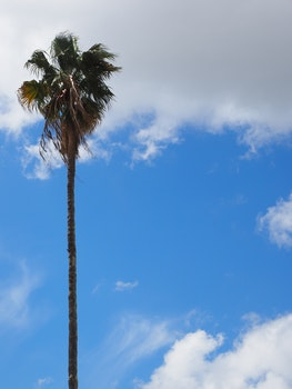 Free stock photo of tree, palm, single, alone