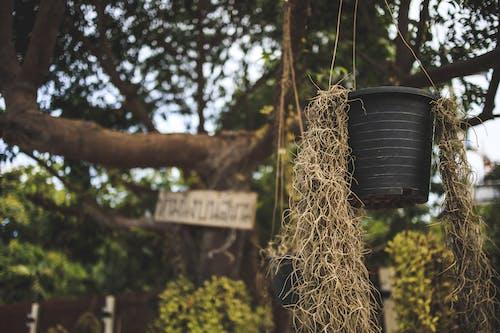 ağaç, bitkiler, bokeh, pattaya içeren Ücretsiz stok fotoğraf
