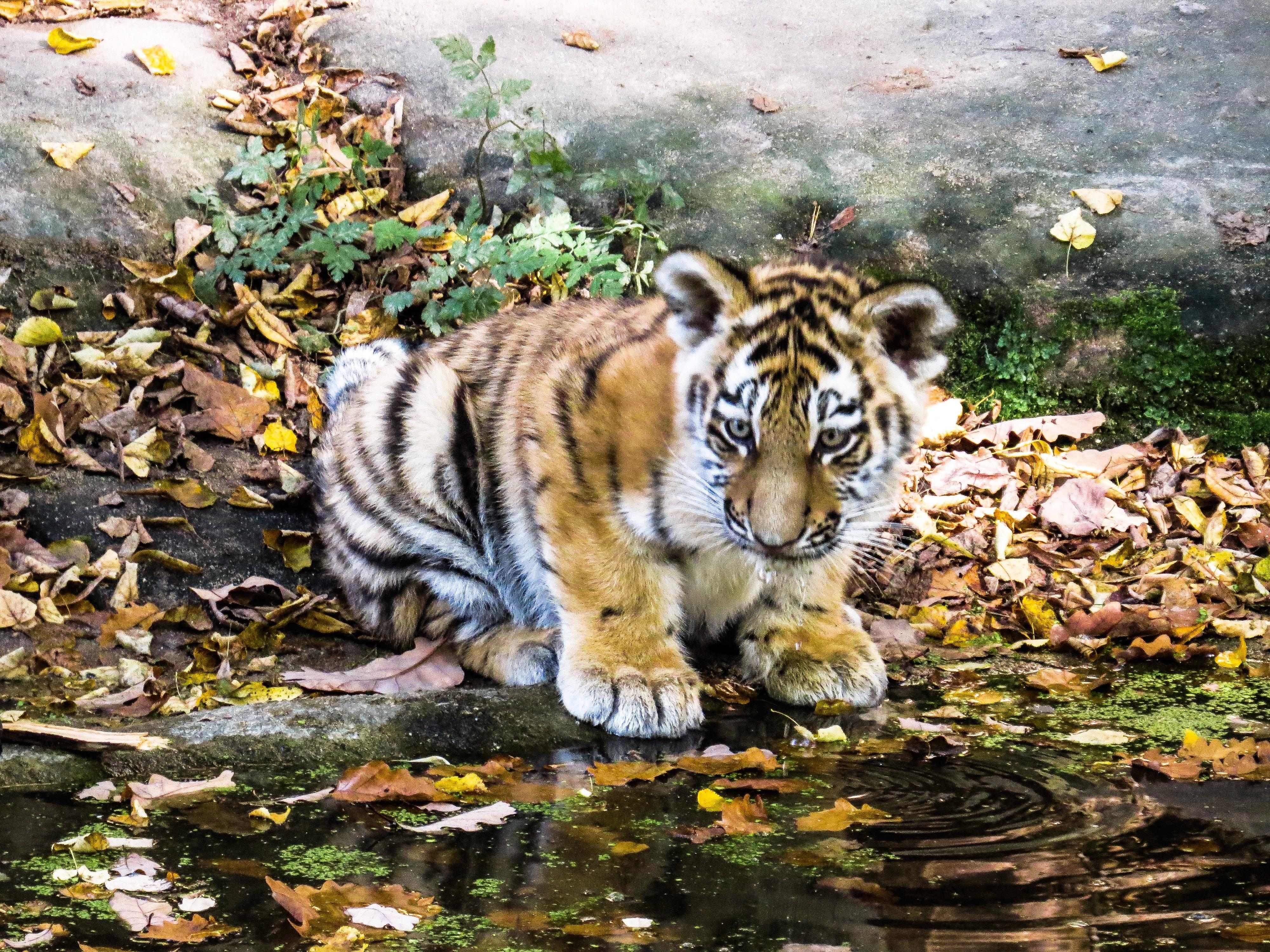 48 Gambar Lucu Binatang Air Terbaru