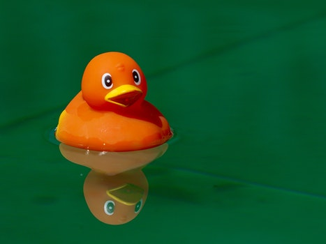 Free stock photo of toys, alone, duck, in the water