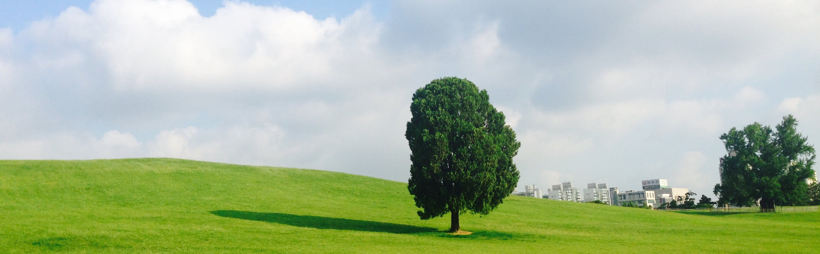 Free stock photo of olympic park, seoul olympic park, alone tree, early wood