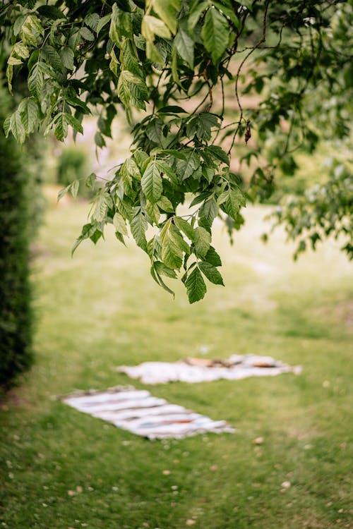 담요, 소풍, 초록 풀의 무료 스톡 사진