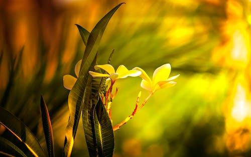 Foto d'estoc gratuïta de a l'aire lliure, brillant, colorit, colors
