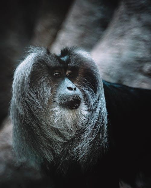 Closeup Photography Of Grey Monkey