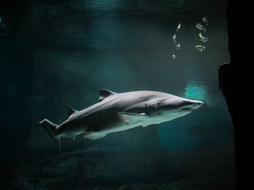 Бесплатное стоковое фото с Аквариум, акула, водный, дикая природа