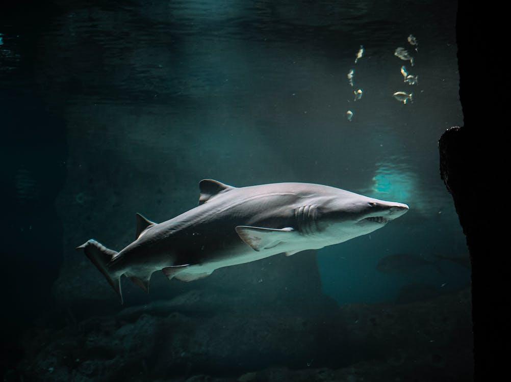 animal, aquari, aquàtic