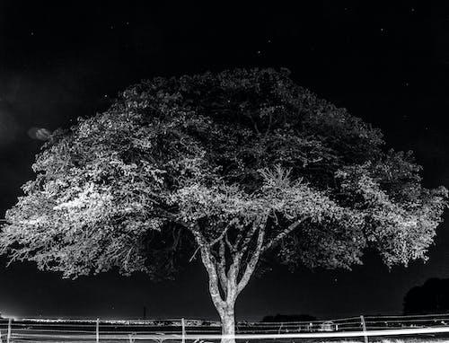 Photos gratuites de arbre, échelle des gris, environnement, espace extérieur