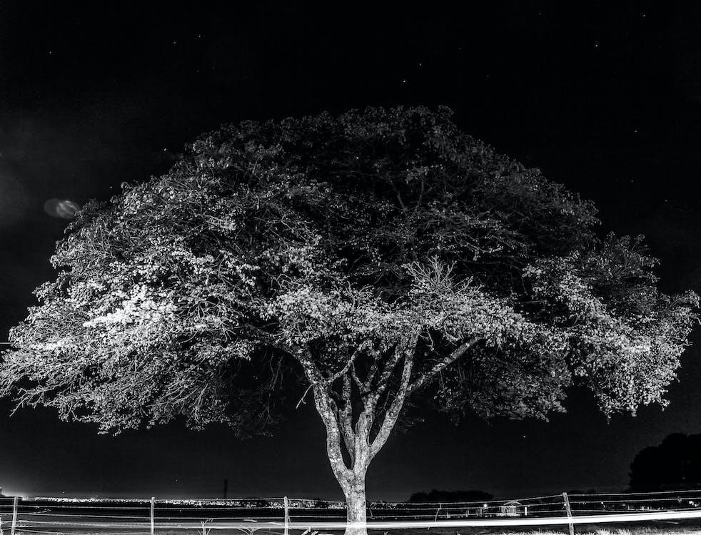 arbre, échelle des gris, environnement