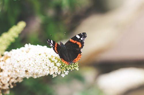 Darmowe zdjęcie z galerii z motyl, motyl monarchy, motyl na kwiatku, natura