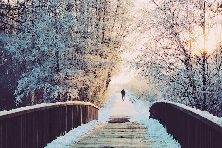 alone, branches, bridge