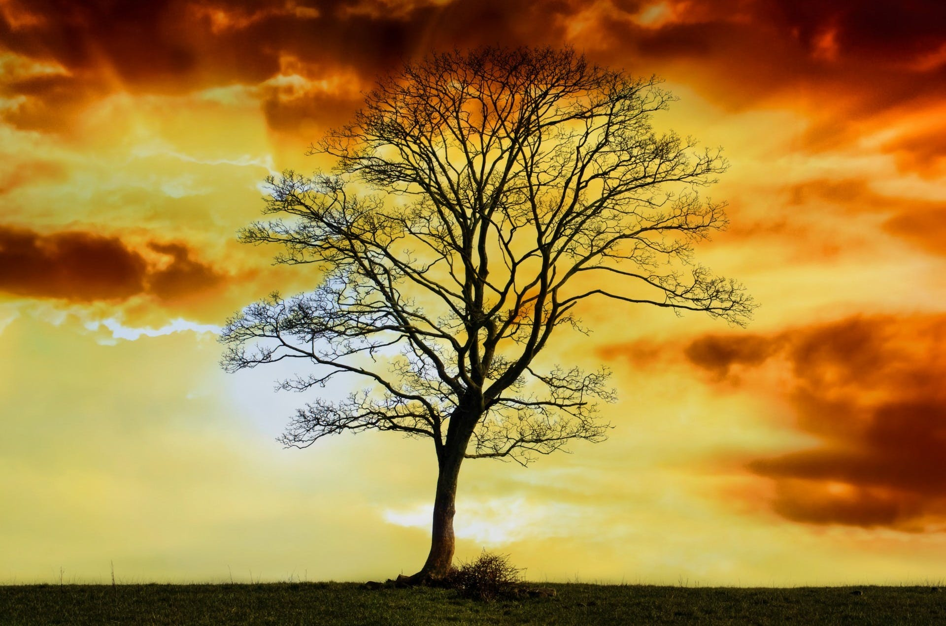 Silhouette of Bare Tree