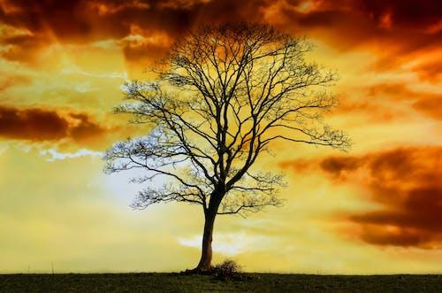 Бесплатное стоковое фото с HD-обои, ветви, живописный, закат