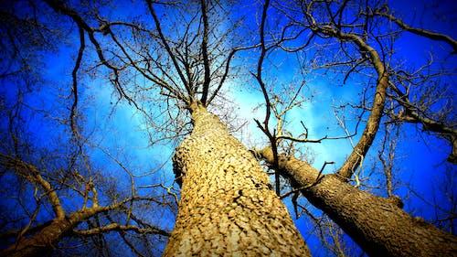 Foto d'estoc gratuïta de alt, arbres, bagul, blau