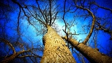 light, nature, blue