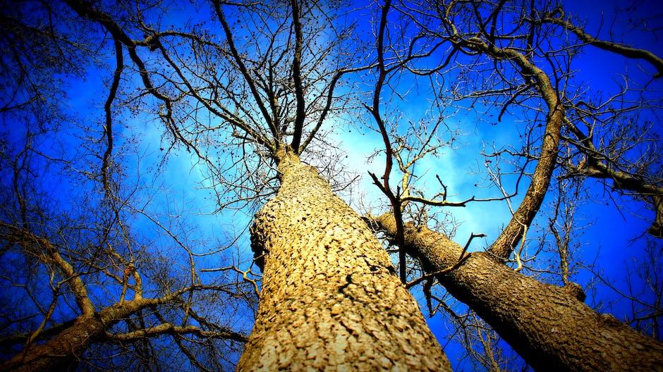 autumn, bark, blue