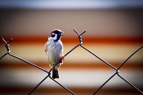 Foto d'estoc gratuïta de ales, animal, bufó, color