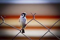 bird, animal, cute