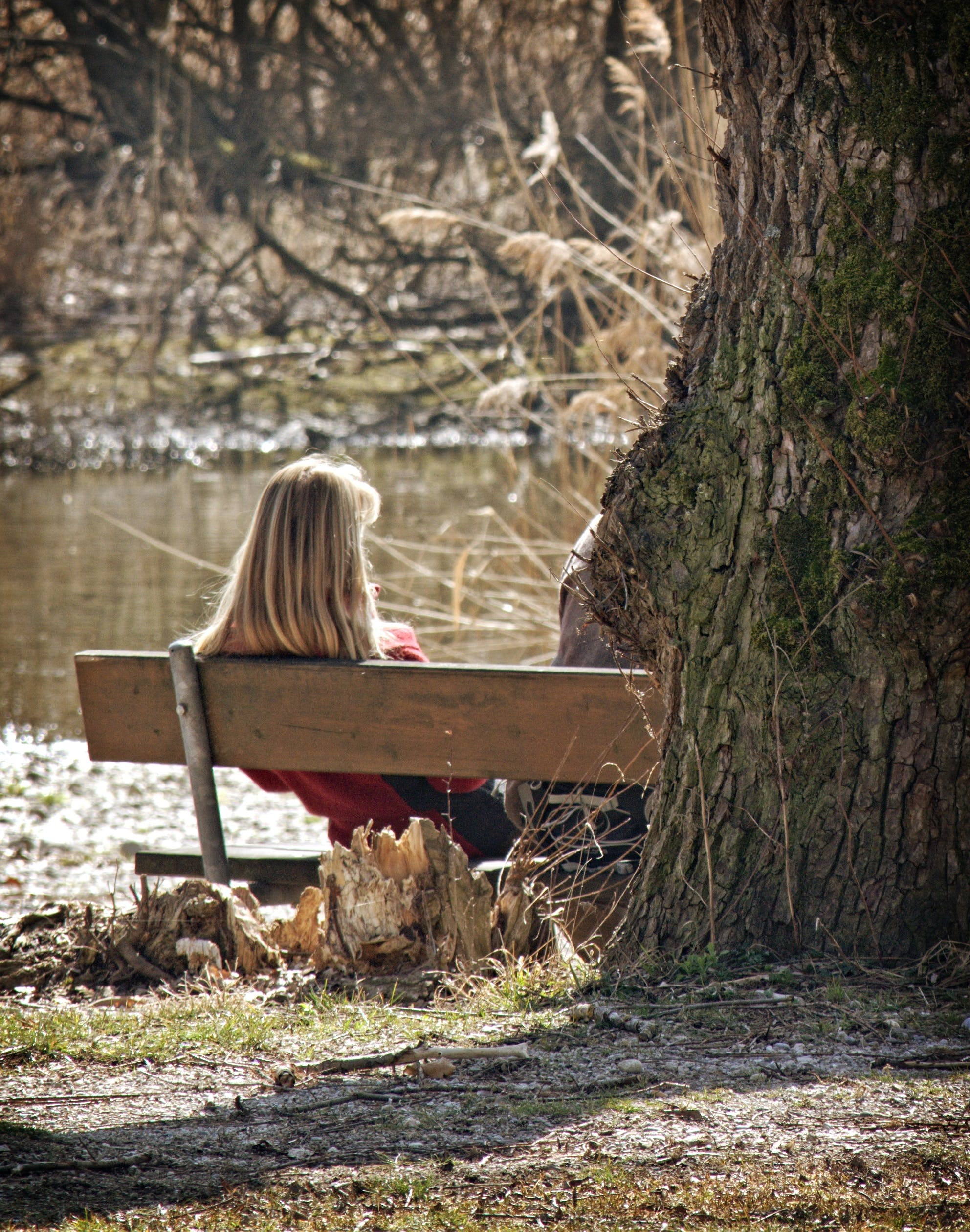 Woman Sitting on Bench Near Tree