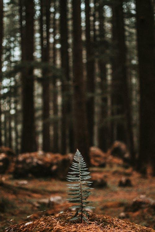 고사리 잎, 나뭇잎, 보케, 성장의 무료 스톡 사진
