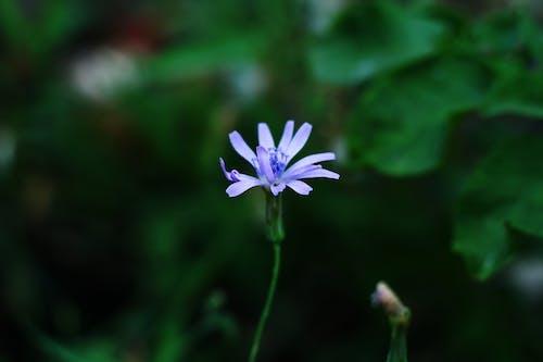 Foto profissional grátis de borrão, escuro, flor azul, macro