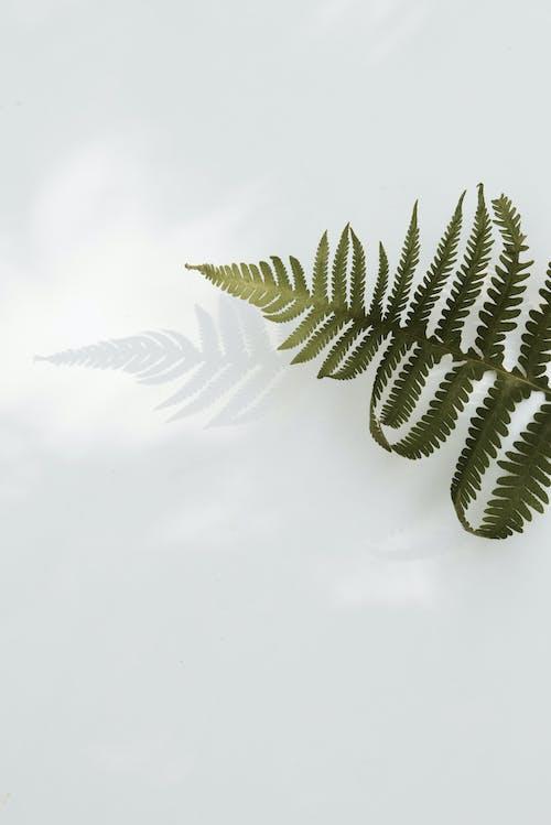 Kostnadsfri bild av abstrakt, bakgrund, blad, botanisk