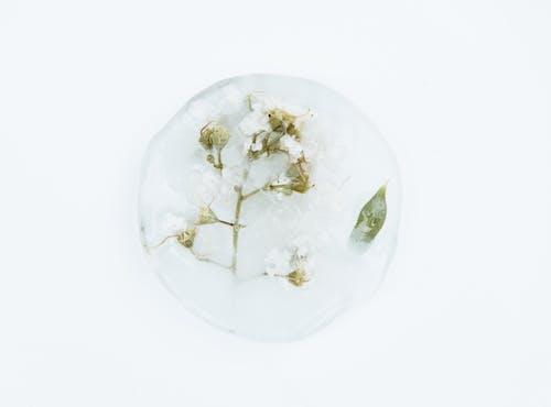 Gratis arkivbilde med atskilt, bakgrunn, blad, blader