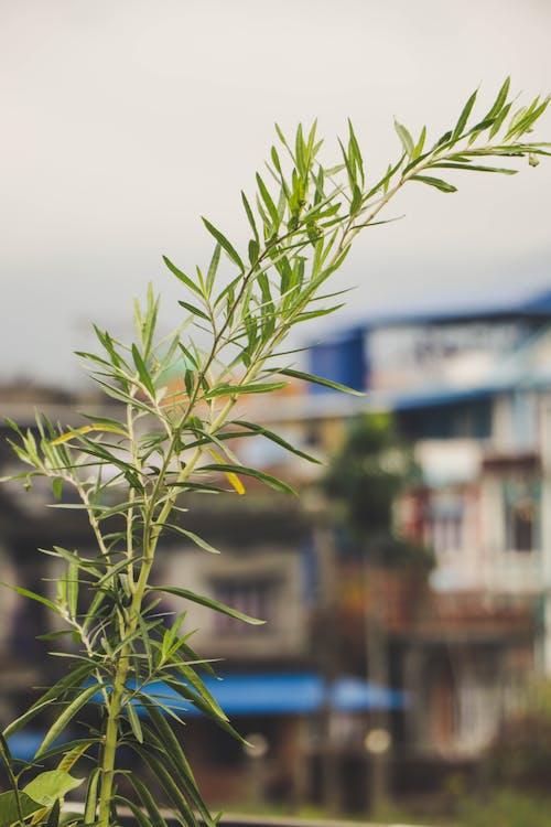 ต้นไม้, พืช, โรงงาน