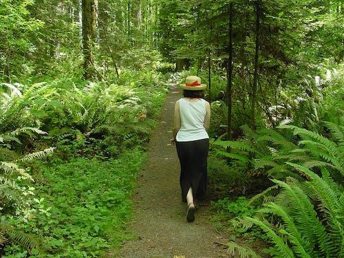 Ingyenes stockfotó johan bos nő séta erdő zöld kalap témában
